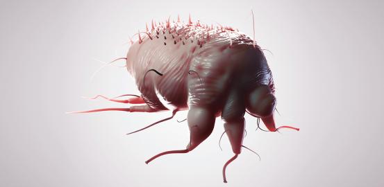 La gale, une maladie qui gratte, encore et encore
