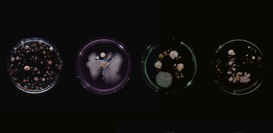 Les bactéries, nos meilleures ennemies