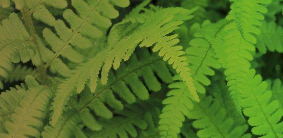Jouer avec l'étanchéité des plantes pour les rendre plus performantes