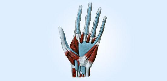 Main bionique: toucher, bouger, sentir?